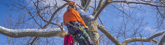 Tree Trimming business insurance